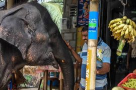 Shopping with the elephants 2 min min 270x180 With Love and Respect   How to Stand Up for Animal Rights