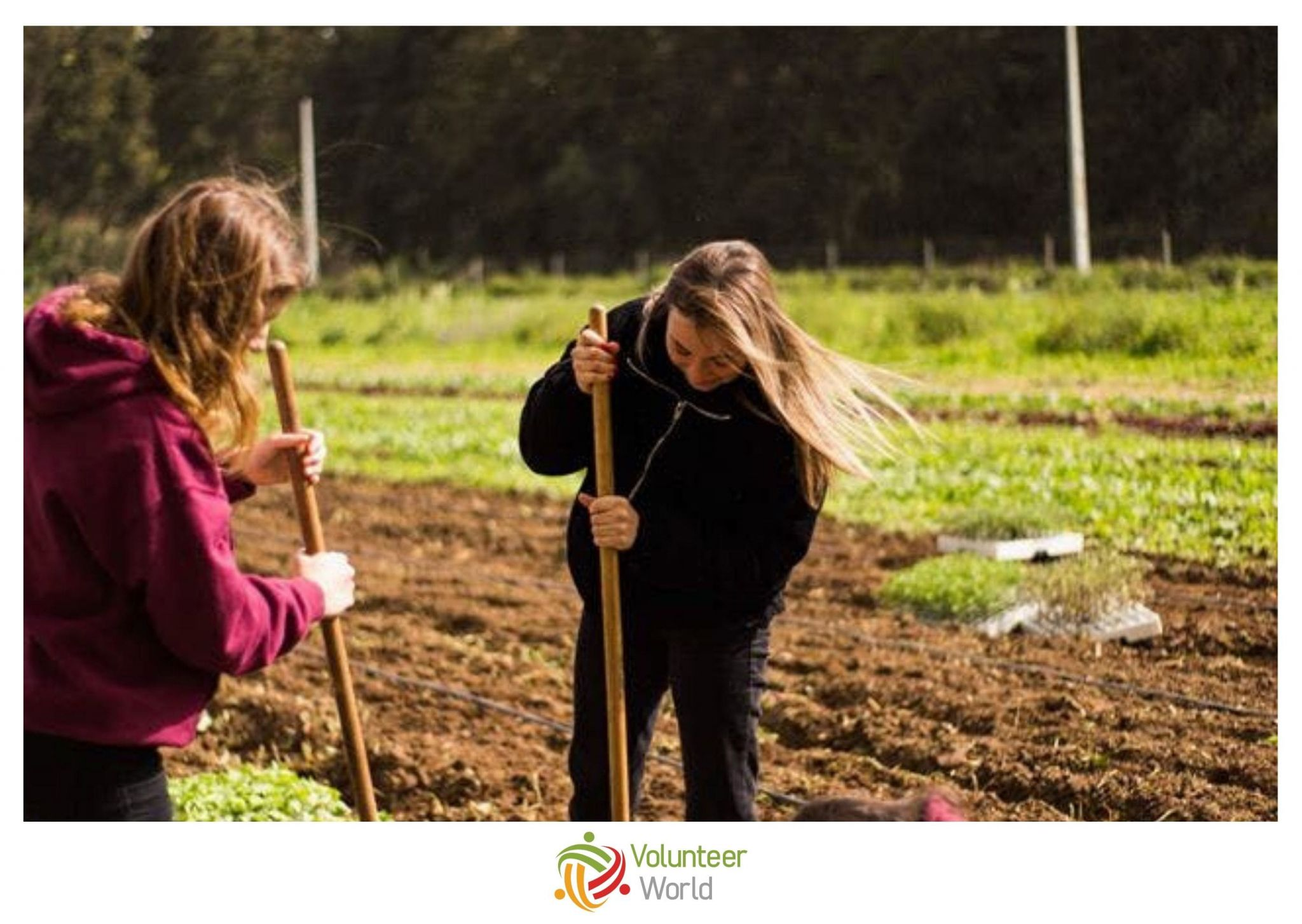 Sustainable Agriculture in Portugal